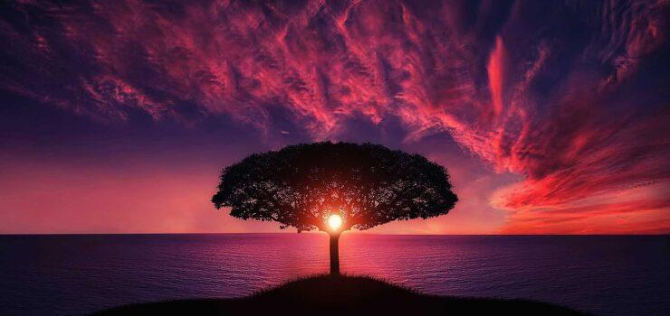 natur_solnedgang