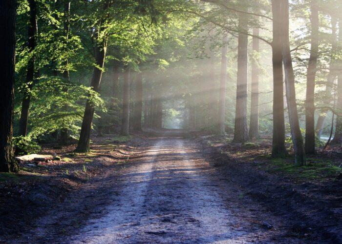skovsti og solstråler