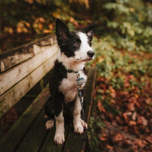hund på bænk