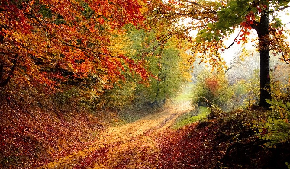 skoven i efteråret